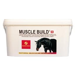 MuscleBuild